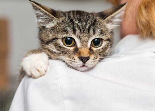 Lienenkämper-Impfungen_Katzen02