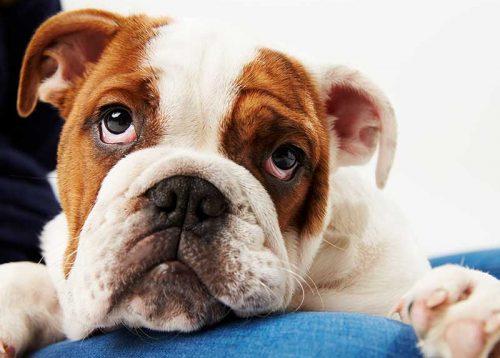 Lienenkämper-Kastration-Hunde