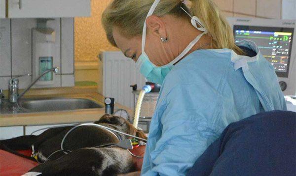 Lienenkämper-Weichteil-Operationen